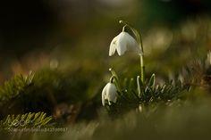 Spring lady by radomikus. @go4fotos