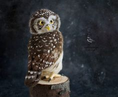 Needle-felted pygmy owl