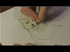 How to Draw Animals : How to Draw Real Wolves. Very quick video that gives you a basic idea.