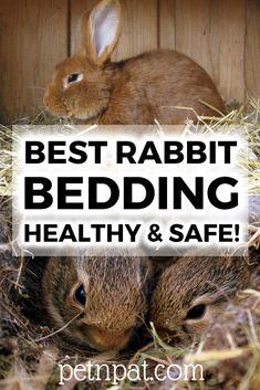 The Best Rabbit Bedding Materials – Healthy & Safe Bunny Bedding! Bunny Beds, Baby Bunnies, Rabbit Toys, Pet Rabbit, Giant Rabbit, Animals For Kids, Baby Animals, Rabbit Hutch Indoor, Bunny Cages