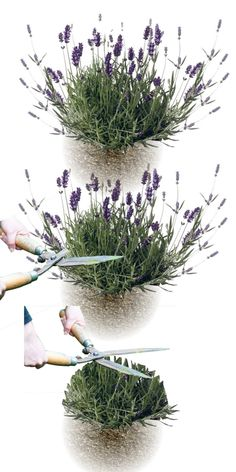 Fake Plants Decor, Planting Flowers, Plants, Garden, French Garden, Medicinal Plants, Flowers, Growing Moss, Fake Plants