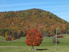 Fall.  Tazewell County, Virginia