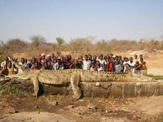 22-foot 2500 pound croc, Niger River, Africa