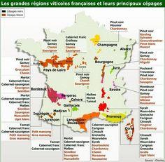 Druiven soorten in Frankrijk