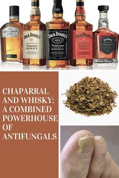Did you know that chaparral and whiskey can be combined to come up with a potent antiseptic and offer a hostile environment for nail fungus to grow? This combination is a powerful toenail fungus treatment you can try at home. Click through to read more on how to get rid of nail fungus. Toenail Fungus Home Remedies, Toenail Fungus Treatment, Gentleman Jack, Whiskey Sour, Jack And Jack, Toe Nails, Fungi, Whisky, You Nailed It