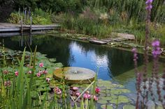 ECOlibrium Landscapes differs from the competition by providing easily sustainable landscapes through the use of native flora, recycled and locally sourced materials.We are dedicated to the ethos of sustainable landscaping/construction/living. Backyard Water Feature, Ponds Backyard, Garden Pool, Water Garden, Natural Swimming Ponds, Natural Pond, Swimming Pools, Outdoor Baths, Cool Pools