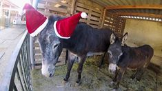 Merry Christmas to all our supporters ♥ - Easy Horse Care Rescue Centre