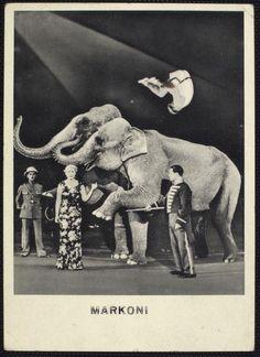Animals as Actors: Circus: Elephants - ID: 61712 - NYPL Digital Gallery
