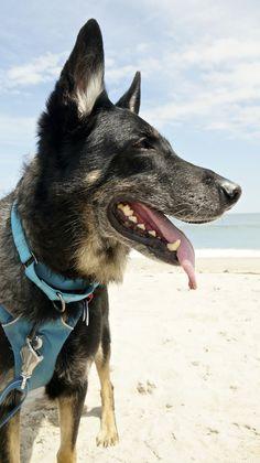 Dog Friendly Beach at Assateague Island National Seashore in Maryland