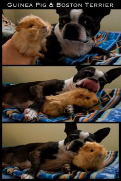 and it was good... | The 30 Most Inspiring Interspecies Friendships Of TheYear
