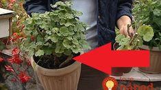 Archívy Dom & záhrada - Page 29 of 272 - To je nápad! Plants, Garden Ideas, Plant, Landscaping Ideas, Backyard Ideas, Planets