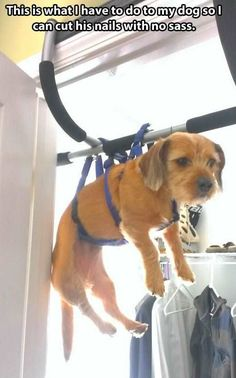 Chin-up bar = groomer's helper  #doggrooming #invention