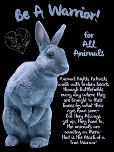 Love All Animals! Not My Circus, Animal Cruelty, Animal Rights, Adoption, Medicine, Sad, Entertainment, Feelings, Clothing