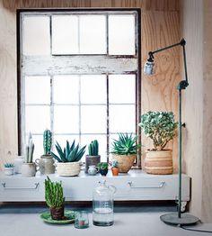 modern plant life.