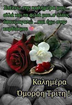 Good Night, Good Morning, Greek, Funny, Nighty Night, Buen Dia, Bonjour, Funny Parenting, Good Night Wishes