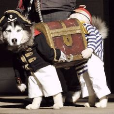 Pirates and Treasure Dog Costume