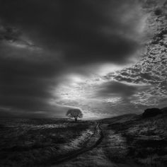 Nathan Wirth used an infrared lens to shoot the exquisite photos above while traveling around the Sonoma and Marin counties in California. Infrared Silence - Images of the Terrain Outside San Francisco via Faith is Torment