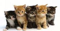 5 kleine katjes