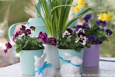 Simple Easter decor.  Pretty pastel containers with frilly pansies.,