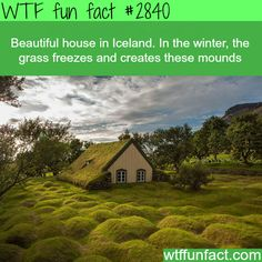 Most beautiful house in Iceland -  WTF fun facts