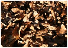 Dieses herbstliche Tischset mit Blättern kann man kostenlos herunterladen und ausdrucken. Firewood, Stuffed Mushrooms, Texture, Crafts, Sunflowers, Stuff Mushrooms, Surface Finish, Woodburning, Manualidades