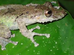 Frog spotting in Costa Rica!  #gvi #nature #conservation