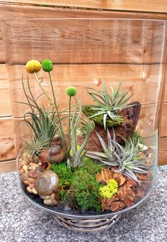 Large One of a Kind Easy Care Low Maintenance by lovelyterrariums