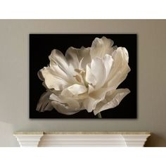 Shop for ArtWall Cora Niele's White Tulip Gallery Wrapped Canvas. Get free delivery at Overstock - Your Online Art Gallery Store! Get in rewards with Club O! Art Floral, Canvas Art Prints, Canvas Wall Art, Canvas 5, Mini Canvas, Painting Canvas, Best Canvas, White Tulips, Flower Art