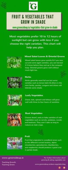 Infographic showing best fruit and veg to grow in a shady garden by @greensideup