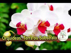 Orquídea, terra ou substrato veja antes de plantar Veja a aula