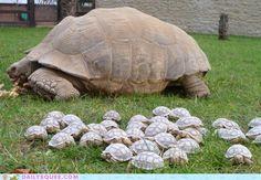 Tortoise Babies!!!