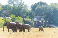 A common view from the lodge. elephants playing in front of us. Elephants Playing, Animals, Animales, Animaux, Animal, Animais