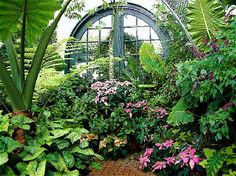Inn on Biltmore Estate: Inside the conservatory.