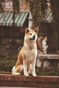 Hachiko. I could only wish for a dog like him.