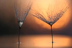 two glasses and sunset by Vadim Trunov on 500px