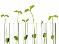 Timberland, Seventh Generation take green chemistry mainstream Green Chemistry, Valspar, Small Plants, Timberland, Organic, Government Agencies, Test Tubes, Startups, Organizations