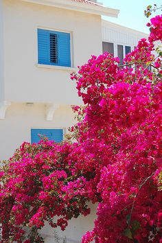 I couldn't resist the combination of colours, taken in Protaras, Cyprus Cyprus Gardens, Places To Travel, Places To See, Cyprus Island, Beautiful Flowers, Beautiful Places, Cyprus Holiday, North Cyprus, Beautiful Islands