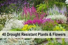 40+ Drought Resistant Plants And Flowers...http://homestead-and-survival.com/40-drought-resistant-plants-and-flowers/