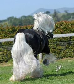 Horses - OMG... black and white GORGEOUS!.