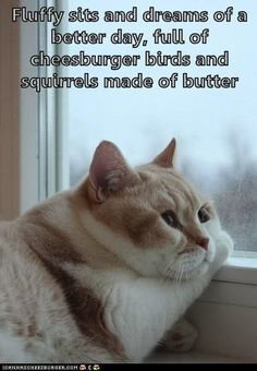Pin By Benna Fiaka On Pets Pinterest Baby Kittens Baby - Fearless cat keeps returning to the london supermarket hes banned from