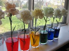 Rainbow Flowers, this would be cool to see in a week to see which one turn that color!