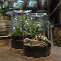 Terrarium, Plants, Home Decor, Terrariums, Decoration Home, Room Decor, Plant, Home Interior Design, Planets