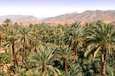 River Draa Valley (Oasis) morocco