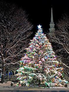 An amazing outdoor Christmas tree! Christmas Scenery, Beautiful Christmas Trees, Christmas Mood, Noel Christmas, Christmas Images, Outdoor Christmas, Christmas Lights, Xmas, Christmas Central