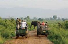 Lakpura Solutions (Pvt) Ltd is your one stop travel organization in Sri Lanka to search out and book the finest travel packages this miracle island has to offer. Private Safari, Safari Jeep, Travel Organization, Sri Lanka, Attraction, National Parks, Wildlife, Holiday Packages, The Incredibles