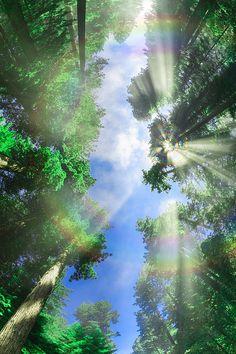 Redwood Rainbow Insp