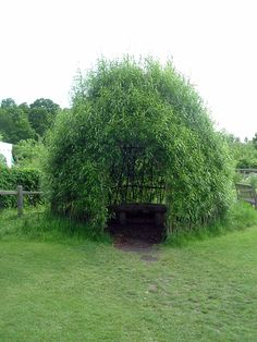 Willow hut - any ideas as to how this was made?---likely just plant willow saplings around the perimeter and let them grow.  love this!
