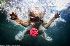 underwater dogs by Seth Casteel.