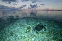 Lost World of Aldabra - Thomas P. Peschak