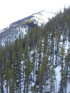 On the gondola Banff, Mountains, Nature, Travel, Naturaleza, Viajes, Traveling, Natural, Tourism
